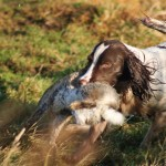 Gun Dog Equipment & Accessories