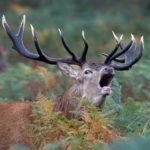 Deer Stalking Equipment