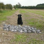 wood pigeon shooting