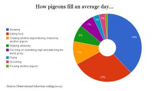 dj-decoy-pigeon