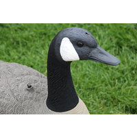 SportsPlast Canada Shell Goose Decoys SportsPlast Canada Shell Goose Decoys The SportsPlast Canada Goose Shell Decoys come in packs of 6 shell decoys with detachable heads they comprise of four feeding shell decoys and two sentury shell decoys whicjh gives you the hunter the best possible combination of decoys ot attract the geese. The SportsPlast Canada Goose Shell Decoys are